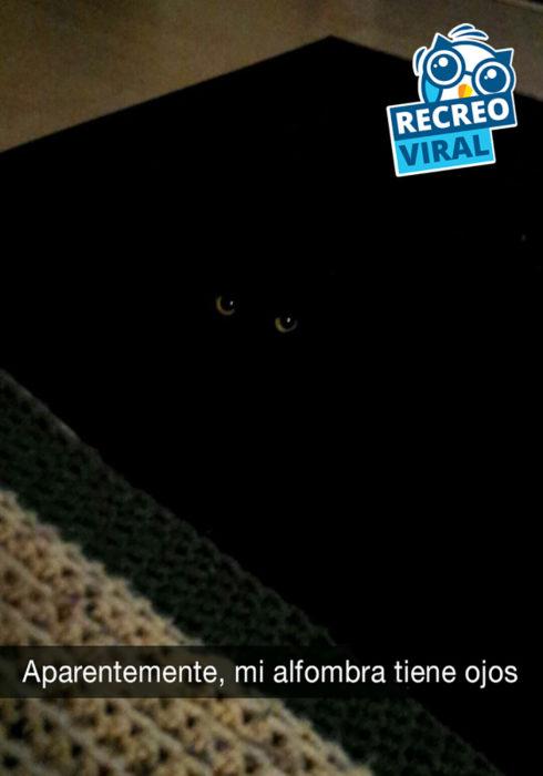 gato negro en alfombra negra