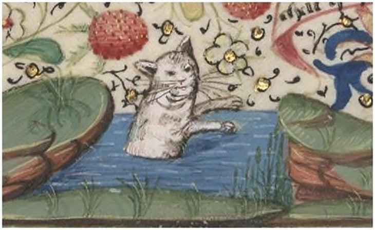 gato medieval con expresión graciosa