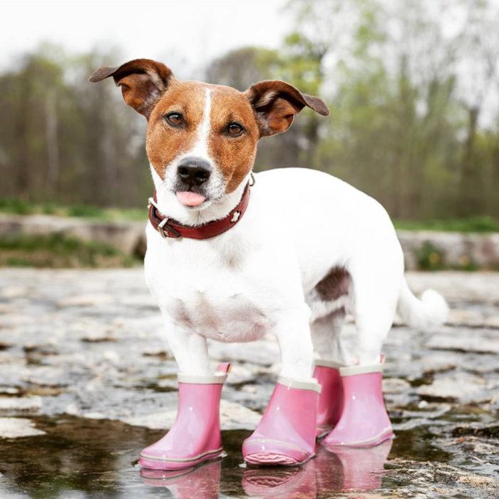 perrito con botas