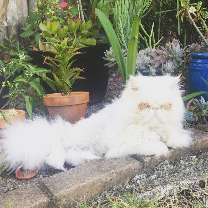 gatito blanco