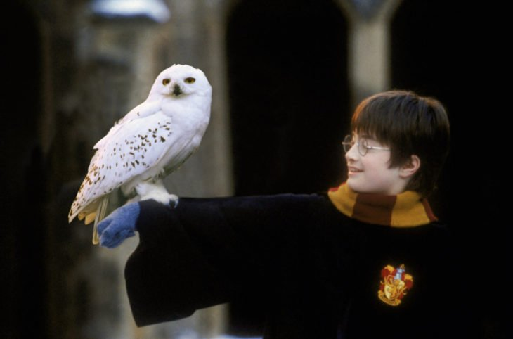 Hedwig de harry potter