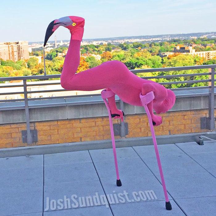 hombre con una pierna parado de manos vestido de flamingo