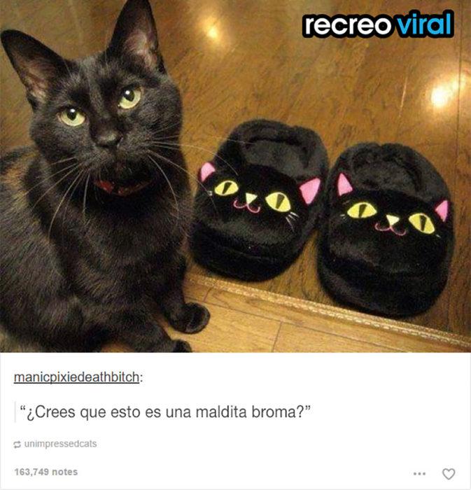 gato al lado de pantunflas de gato