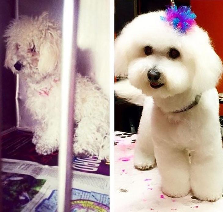 perrito esponjoso antes y después de ser rescatado