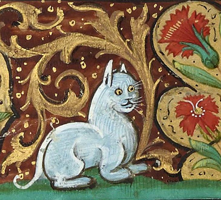 gato medieval sorprendido