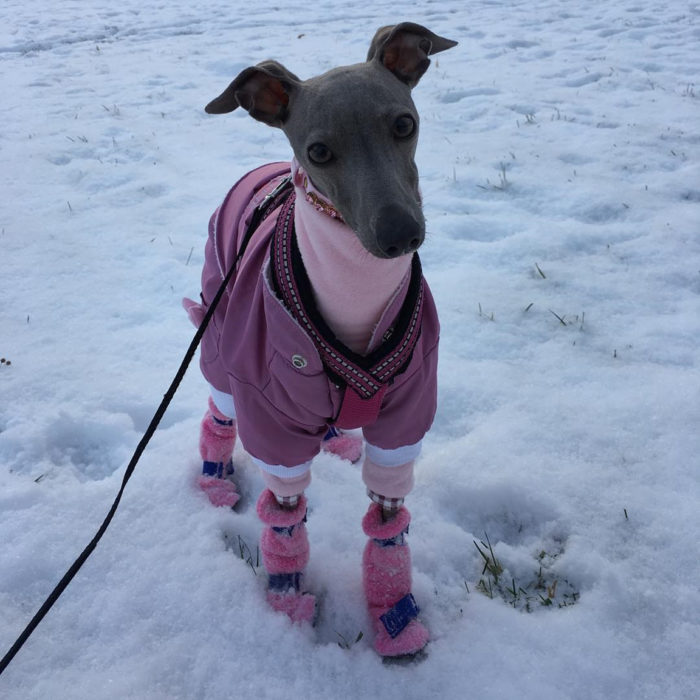 perro con chaqueta rosa y zapatos