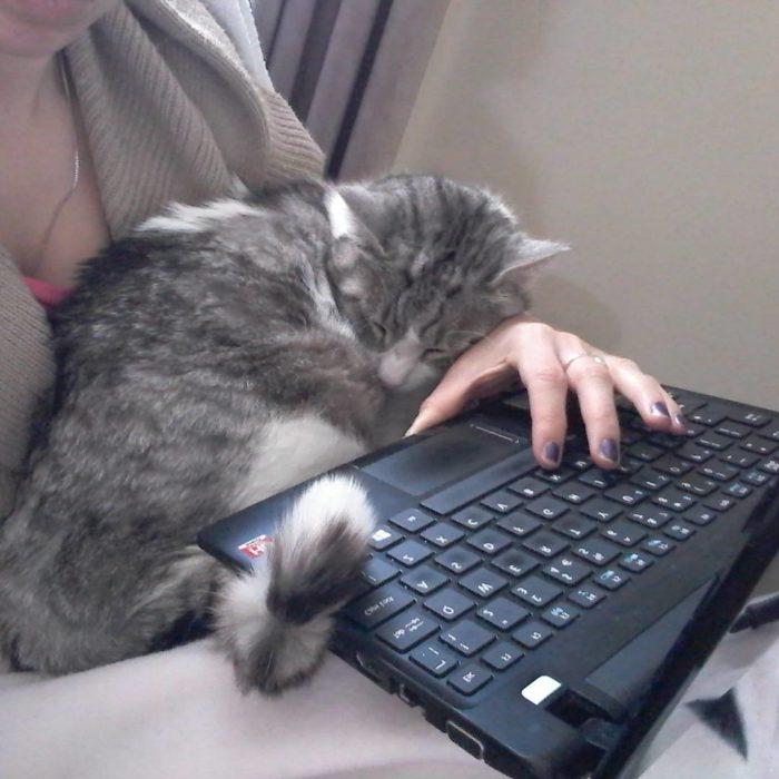 gato en el regazo de una mujer que apunta en la computadora