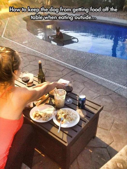 mujer con mesa y comida y perro en medio de la piscina