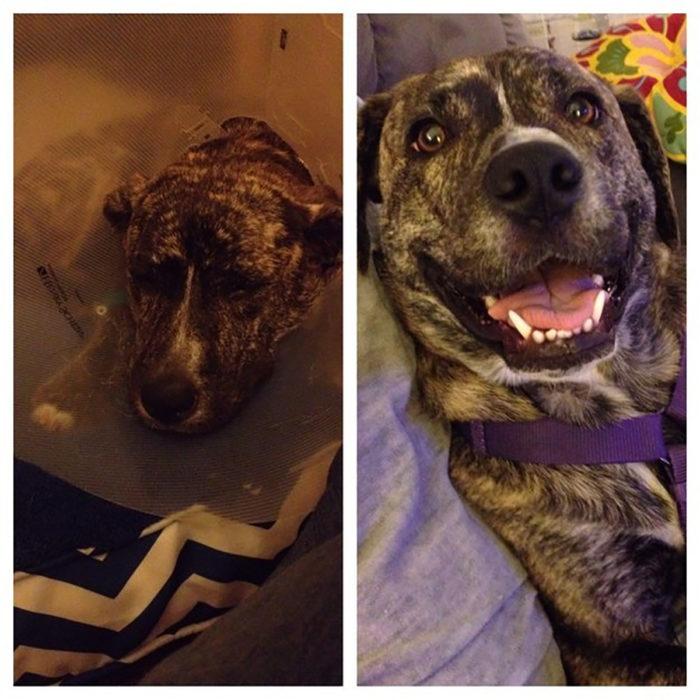 perro triste antes de ser rescatado y feliz después de serlo