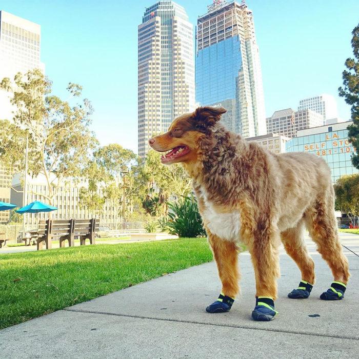 perrito en ciudad usando zapatos