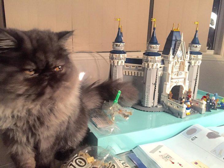 gato al lado de un castillo en miniatura