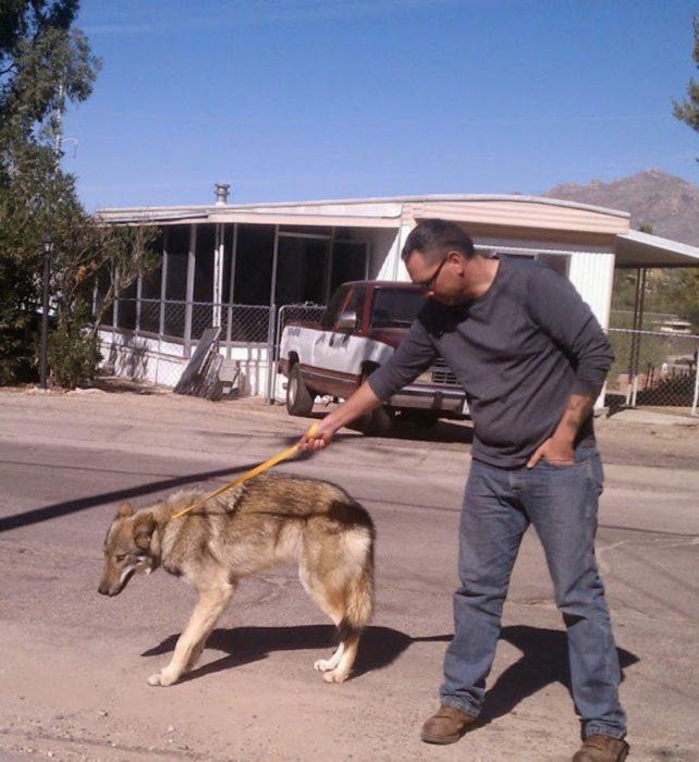 Perro lobo con correa