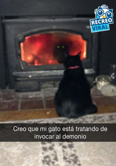 gato negro frente a chimenea