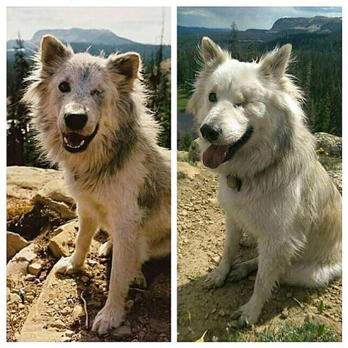 perrito con un ojo antes y después de ser rescatado
