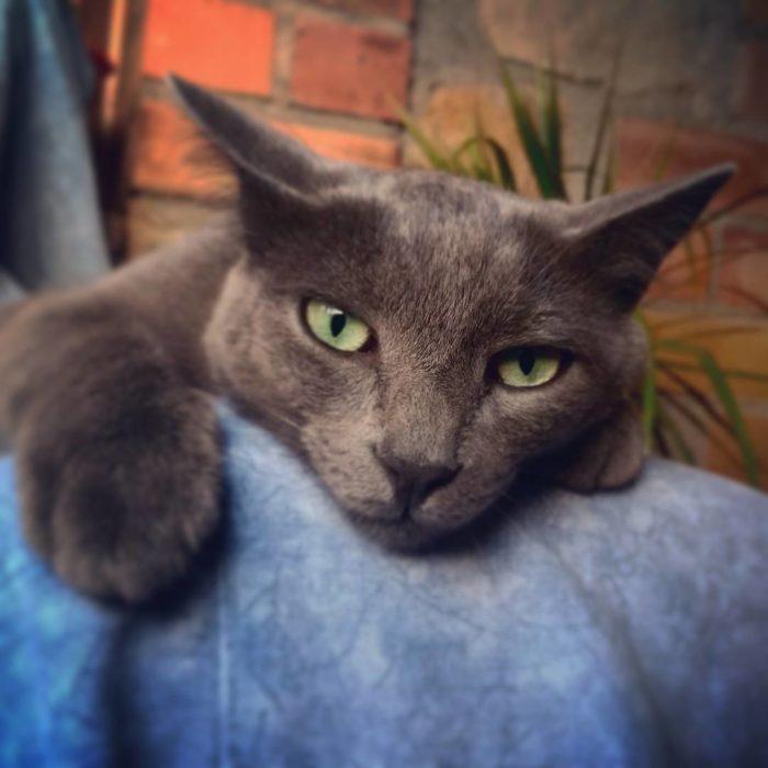 gato negro de ojos verdes