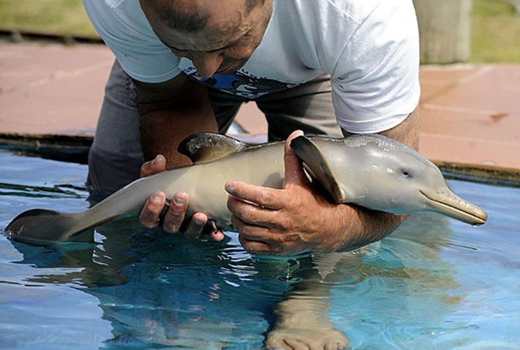 bebé delfín