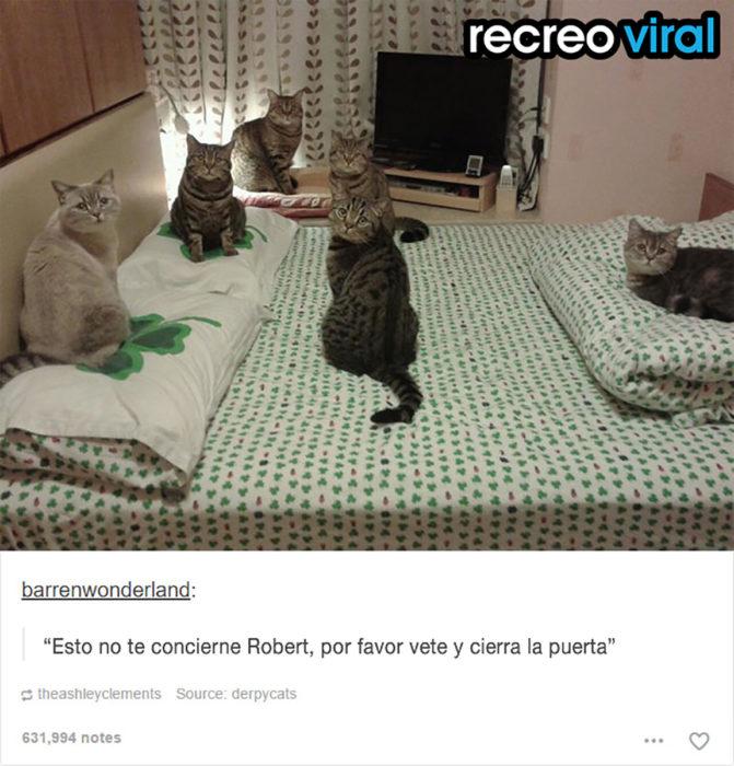 seis gatos recostados en una cama