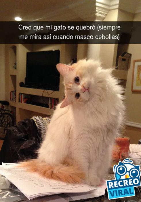 gato con la cabeza inclinada