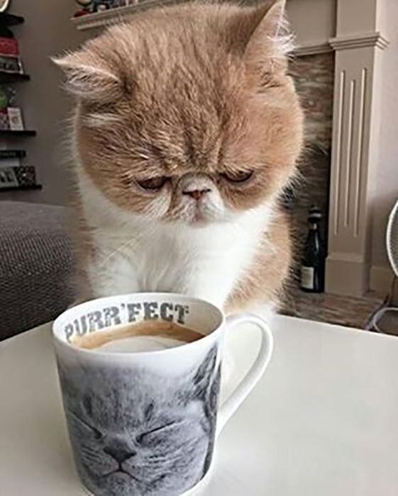 gato frente a una taza de café