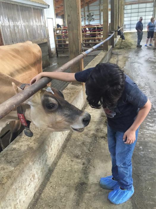 vaca y niño