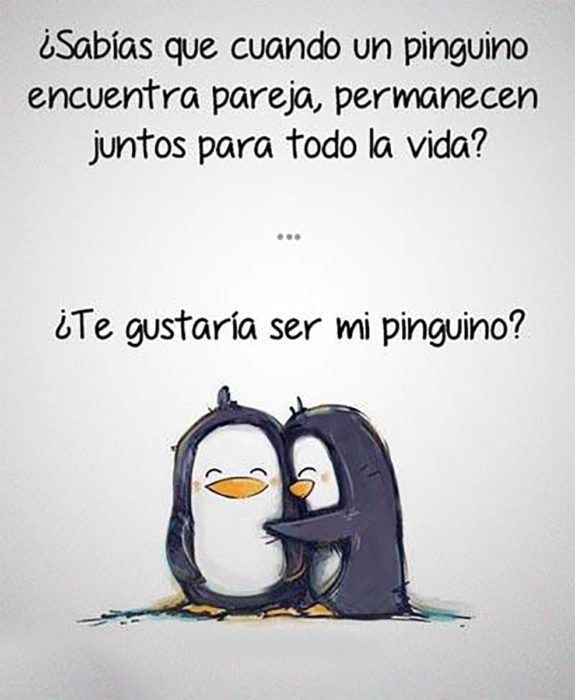 frase motivacional de pingüinos