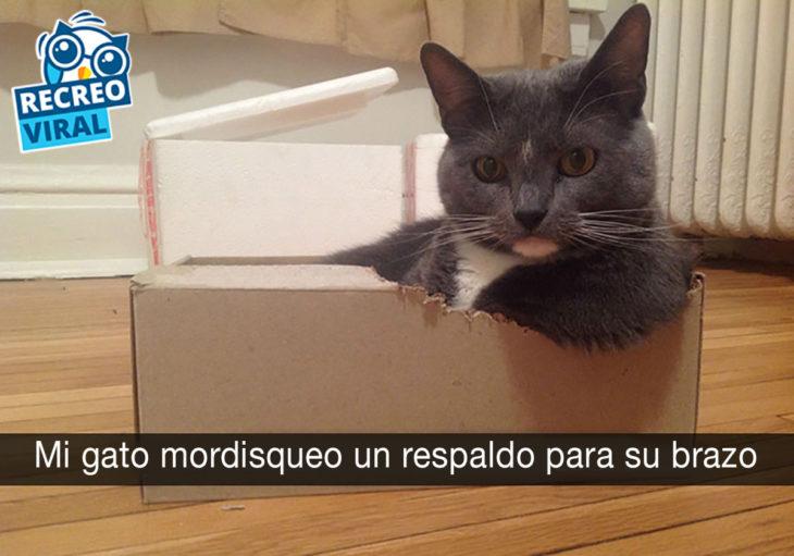 gato sentado dentro de una caja