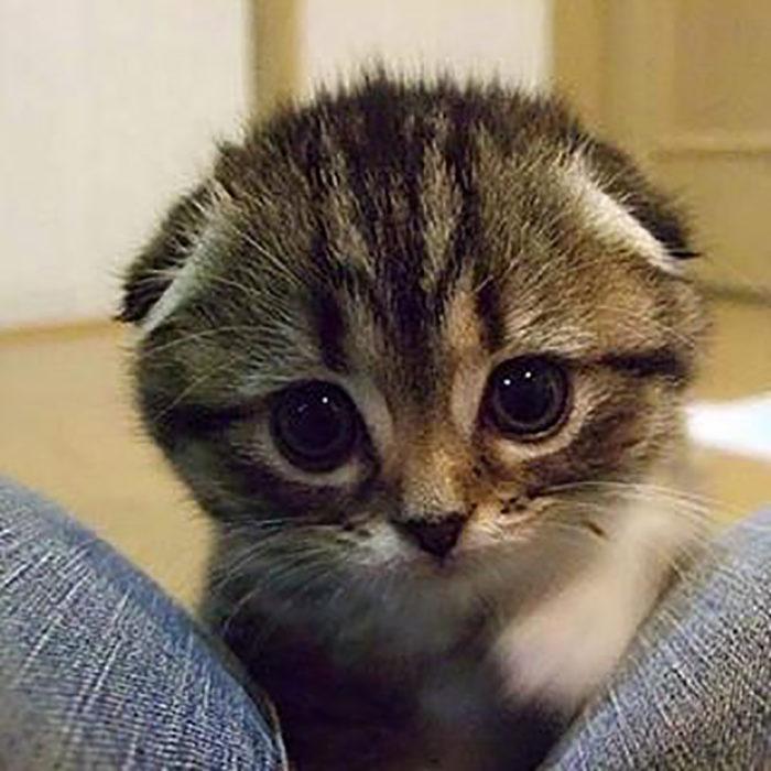 cara tierna de gato