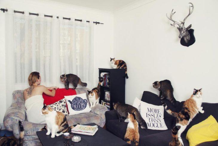 Una habitación con muchos gatos