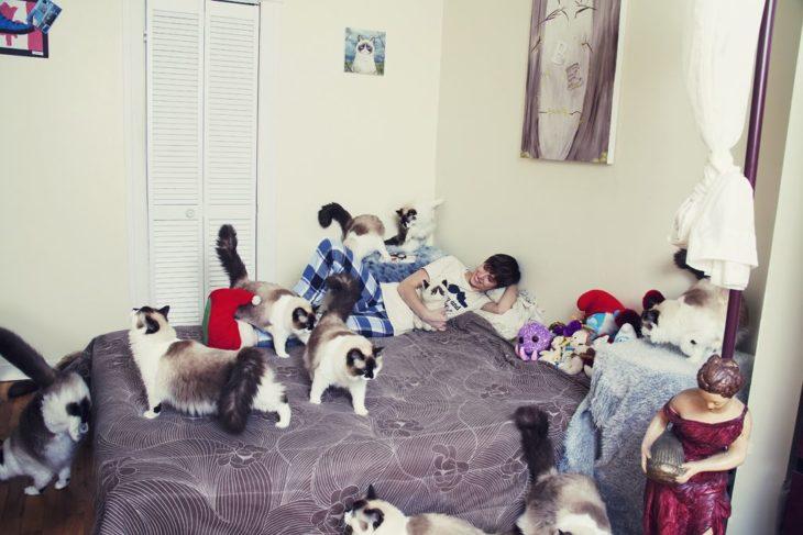 La habitación está llena de felinos