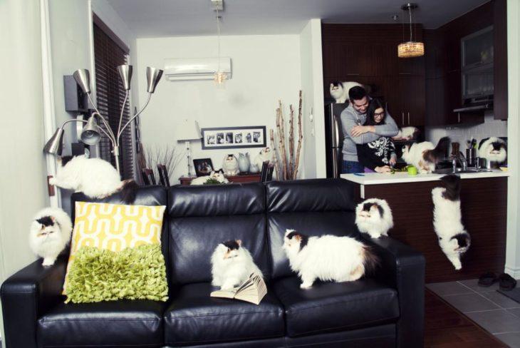 Una pareja con una casa llena de gatos