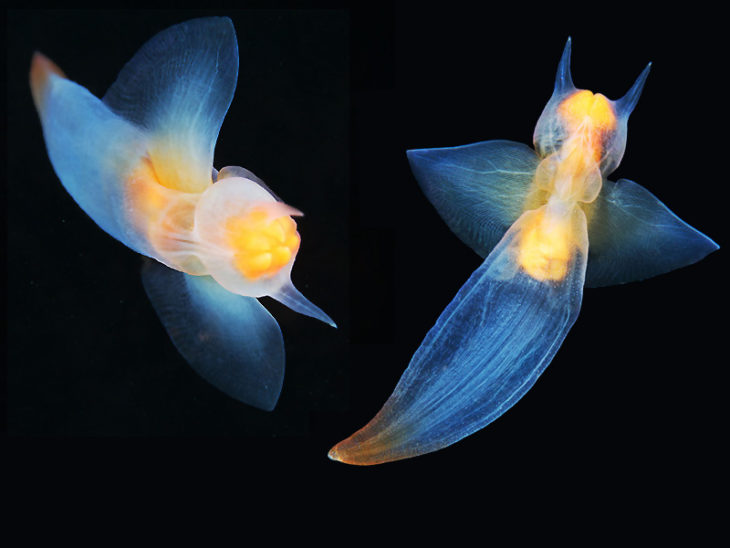 Ángel del mar