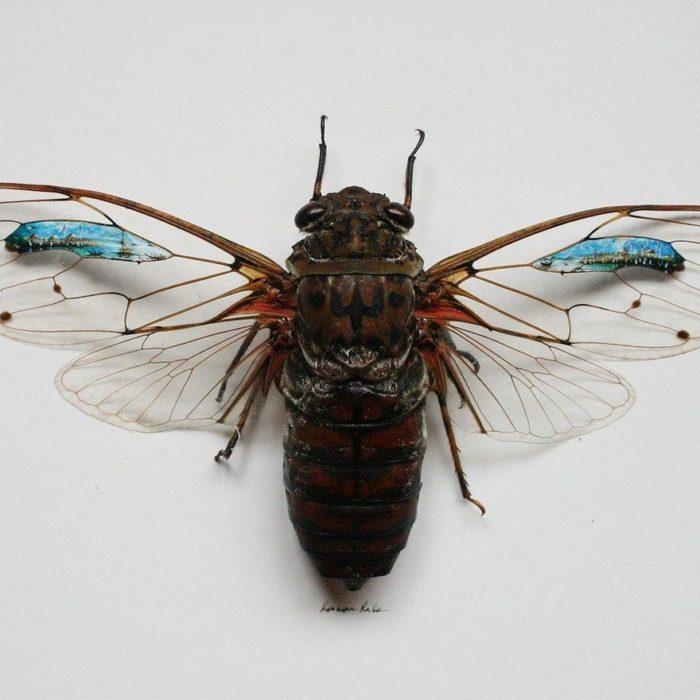 Una mosca con obras de arte en sus alas