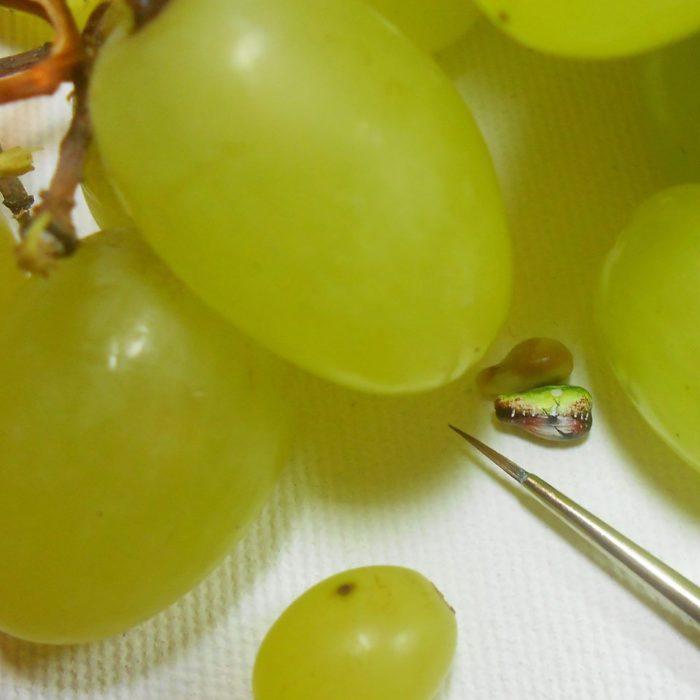 Pinturas hechas en las semillas de las uvas