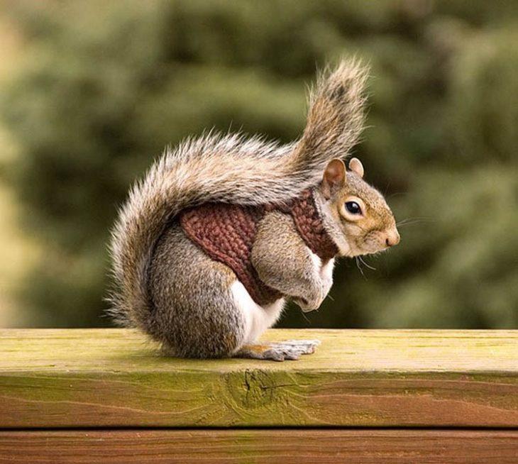 Ardilla con suéter