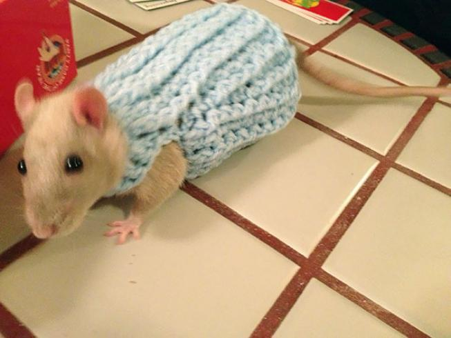 Ratón con suéter