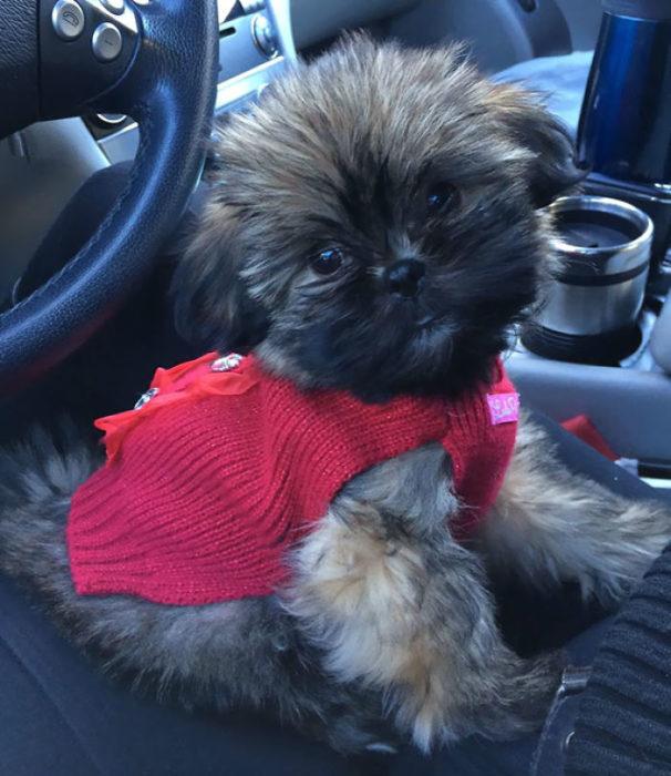 Perrito con suéter