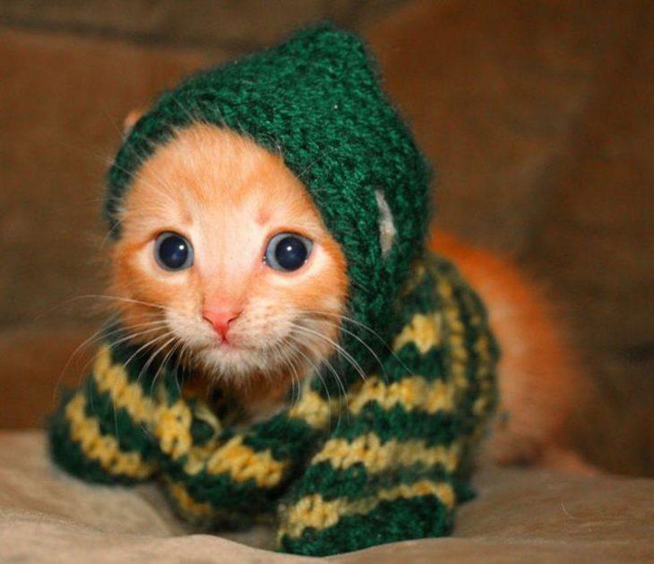 Gatito con suéter