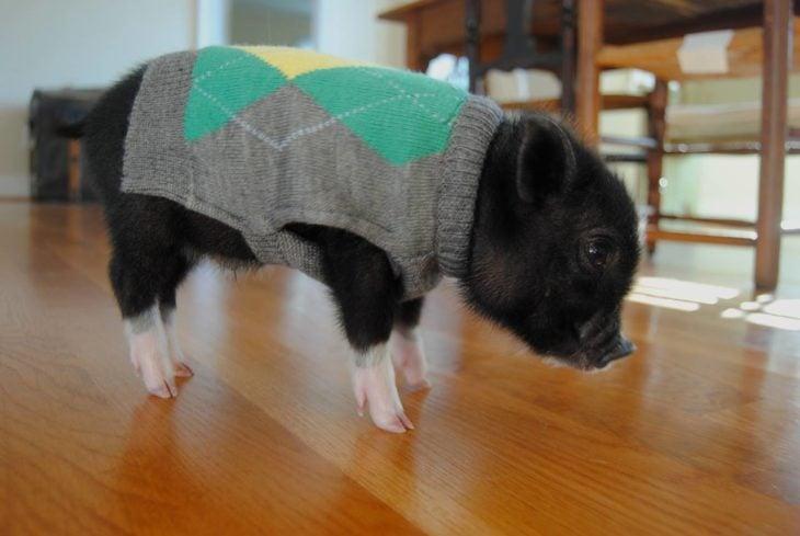 Cerdito con suéter