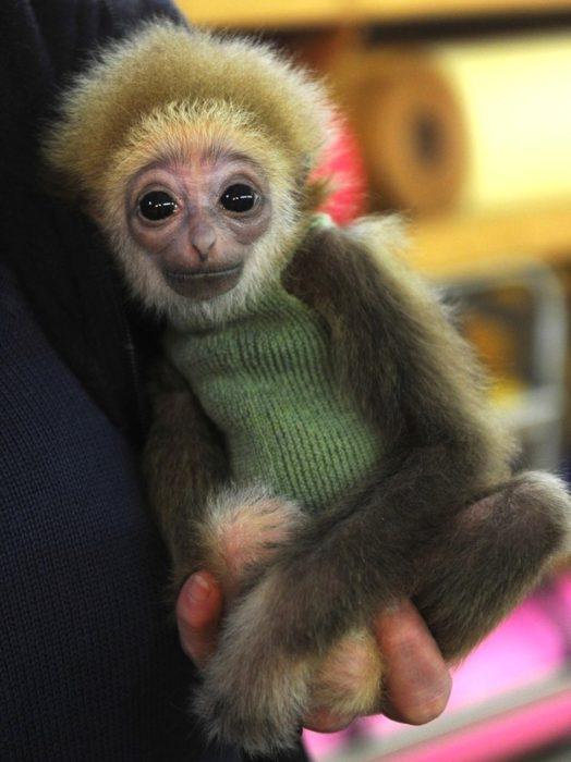 Chango con suéter