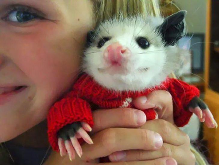 Hurón con suéter