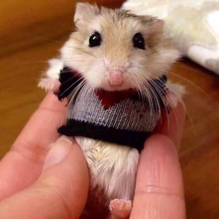 Ratoncito con suéter