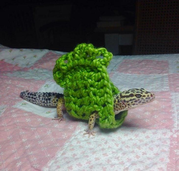 Lagarto con suéter