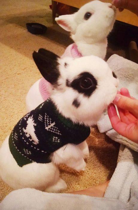 Conejo con suéter