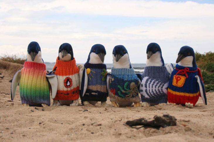 Pinguinos con suéter