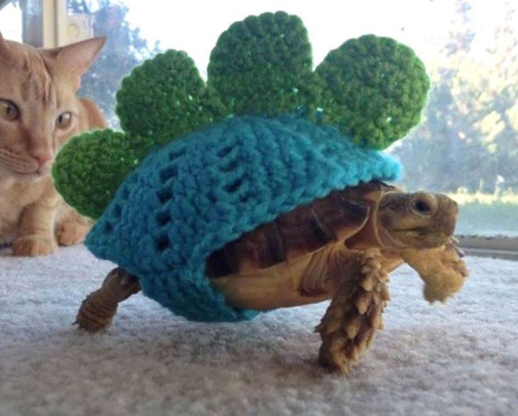 Tortuga con suéter en su caparazón