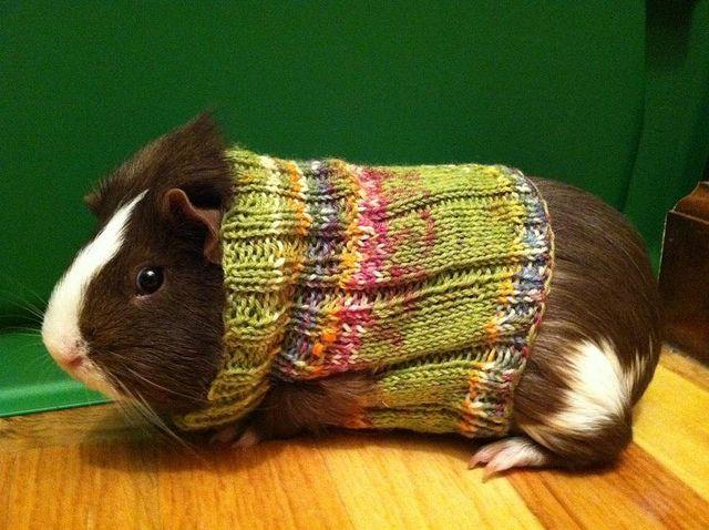 Hámster con suéter
