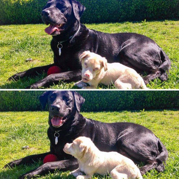 bati-perro y sus amigos