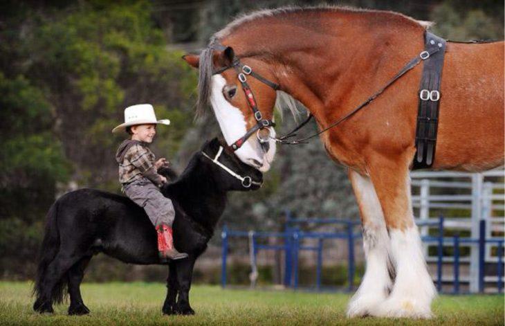 Bebé como jinete de un caballo miniatura y un caballo grande