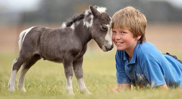 Chico junto a un caballo miniatura