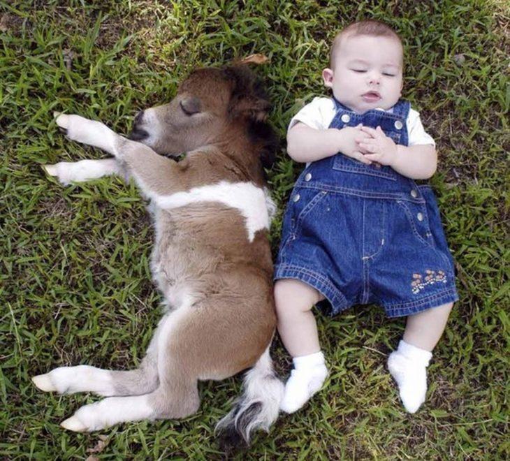 Caballo miniatura con un bebé